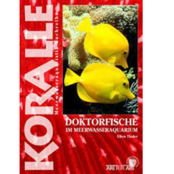 Art für Art - Doktorfisch - Fish-Point Uetendorf